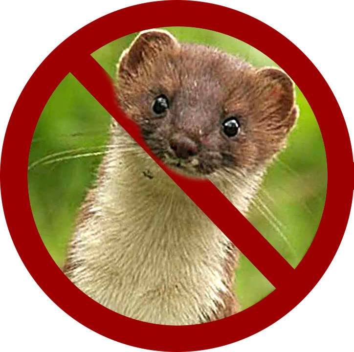 No Weasels Allowed